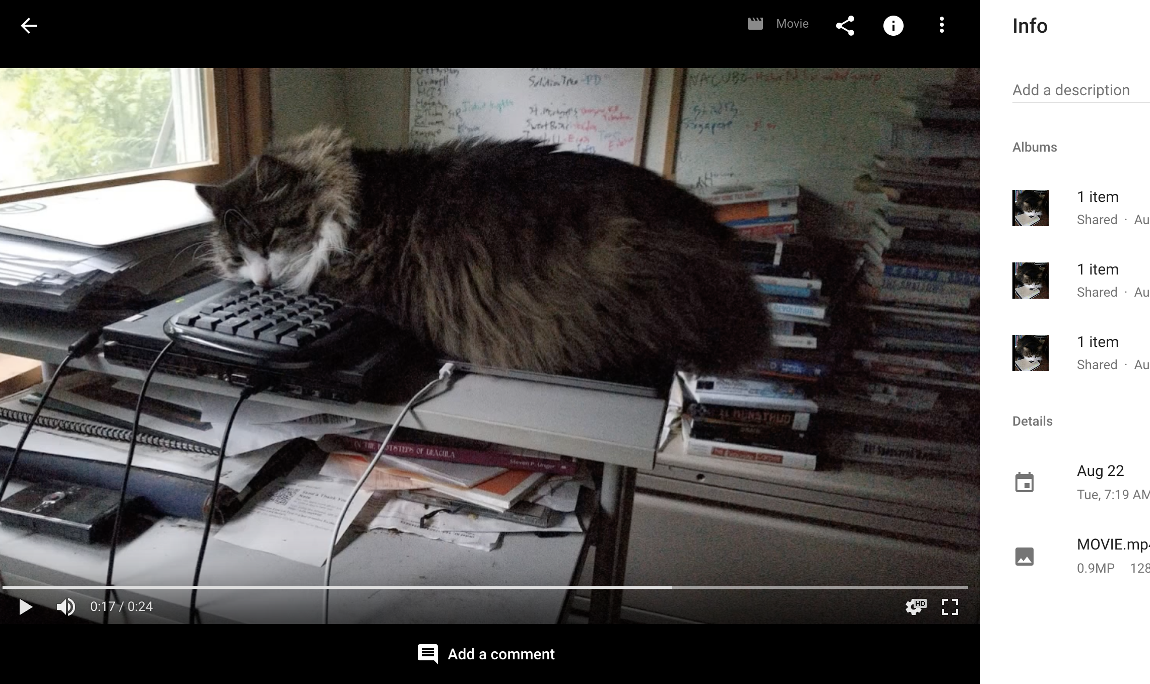 cat videos have brought the posthuman era upon us all
